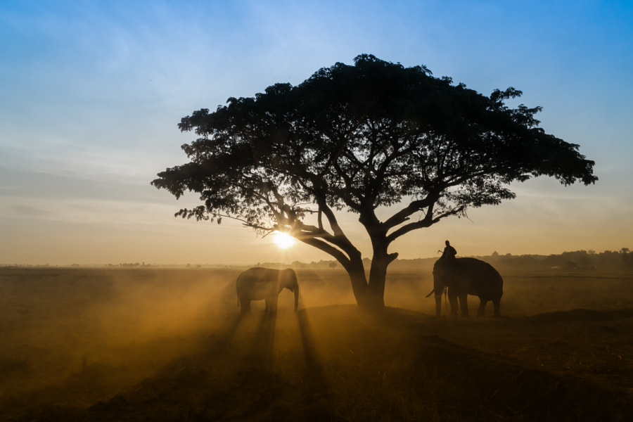 silhouettes of elephants through the trees by Worachai Yosthamrong on 500px.com