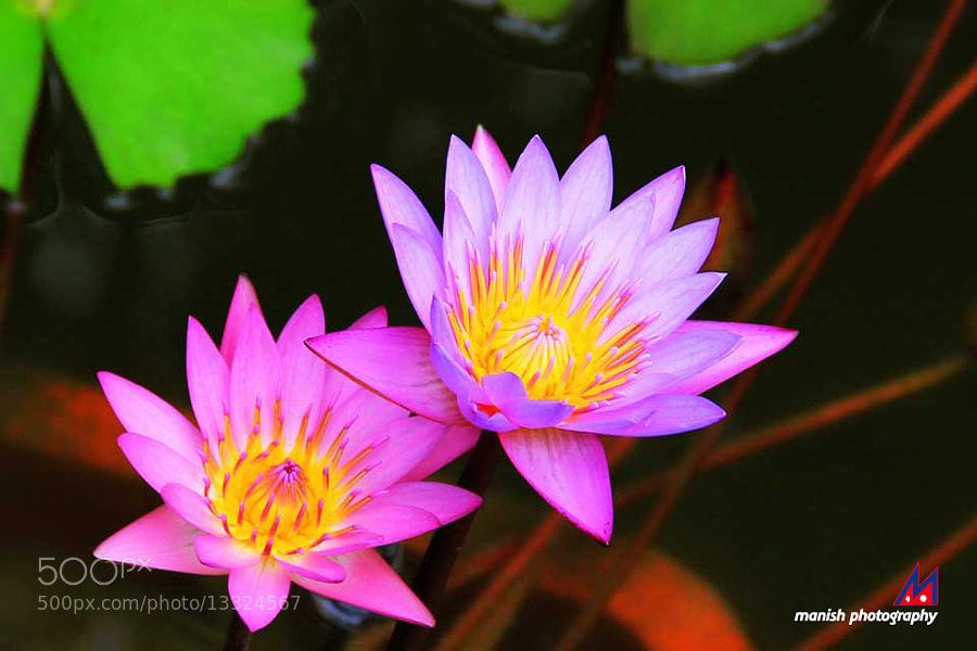 Natural Beauty by Manish Shakya (MrShakya)) on 500px.com
