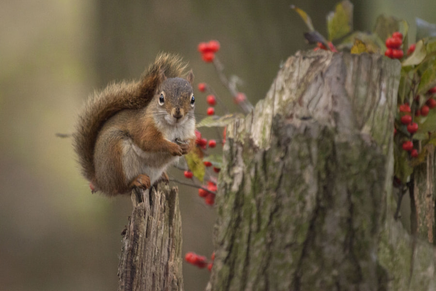 Have a good holiday by Andre Villeneuve on 500px