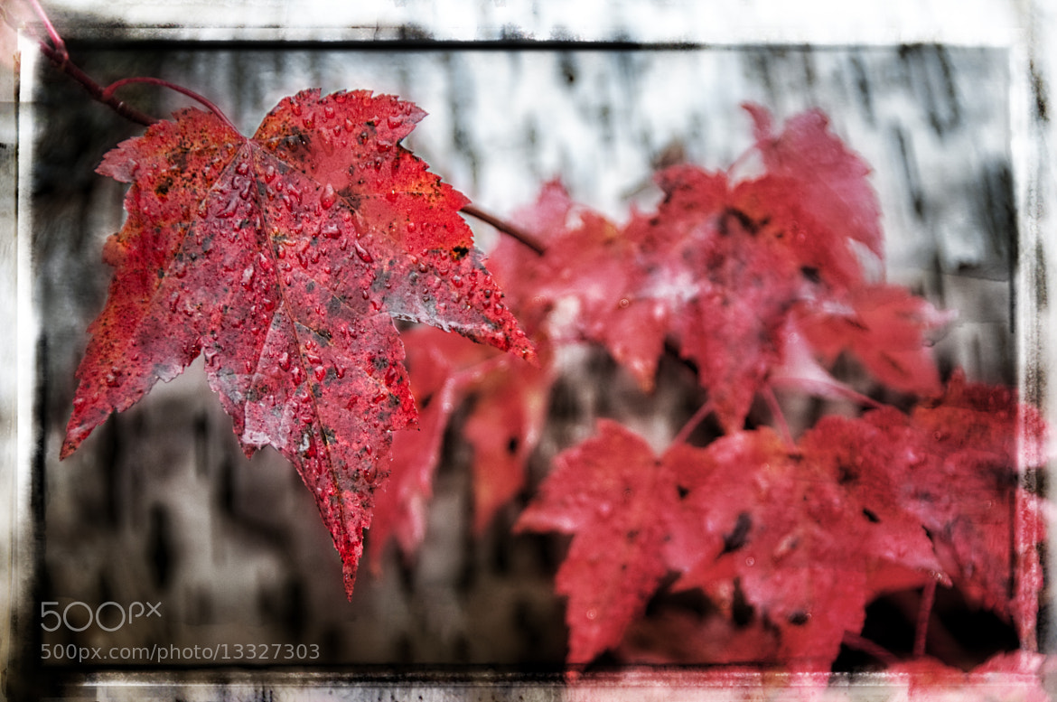 Photograph Red  by Jerry Williams on 500px
