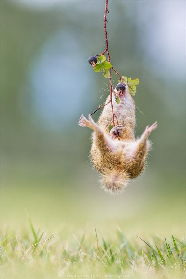 ~ Gymnastics ~