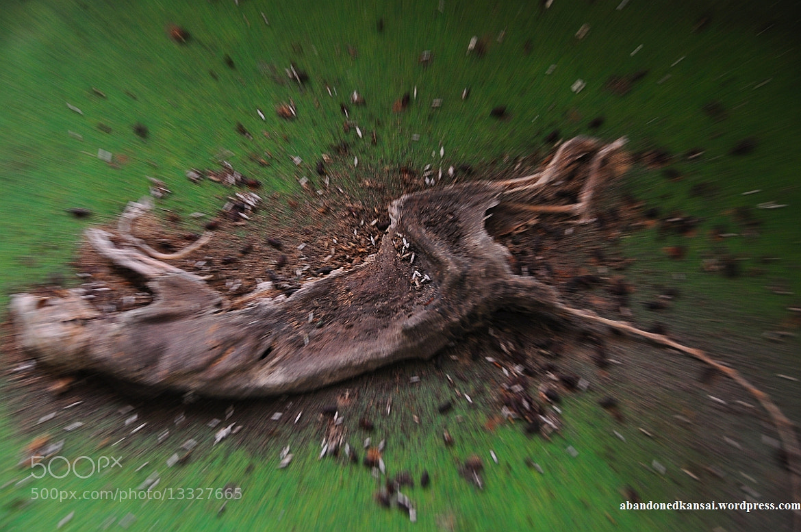Photograph Dead Rat by Abandoned Kansai on 500px