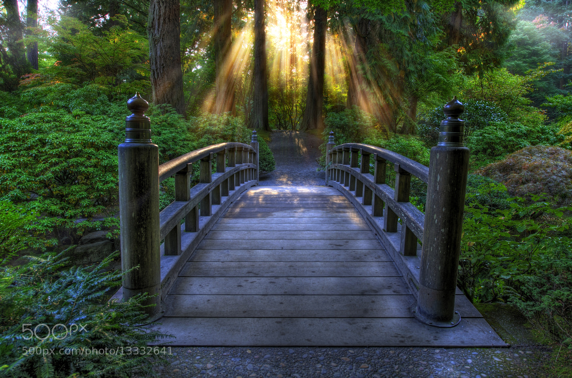 Photograph Bridge in the Gardens by Cody Wilson on 500px