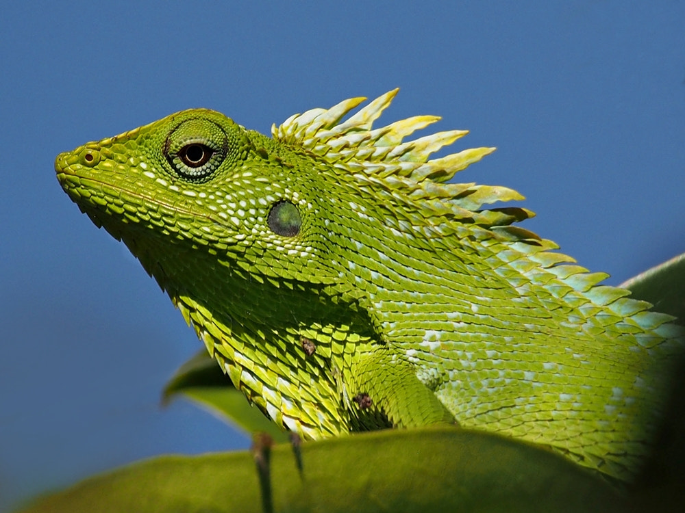 Photograph green on green over blue by Irawan Subingar on 500px