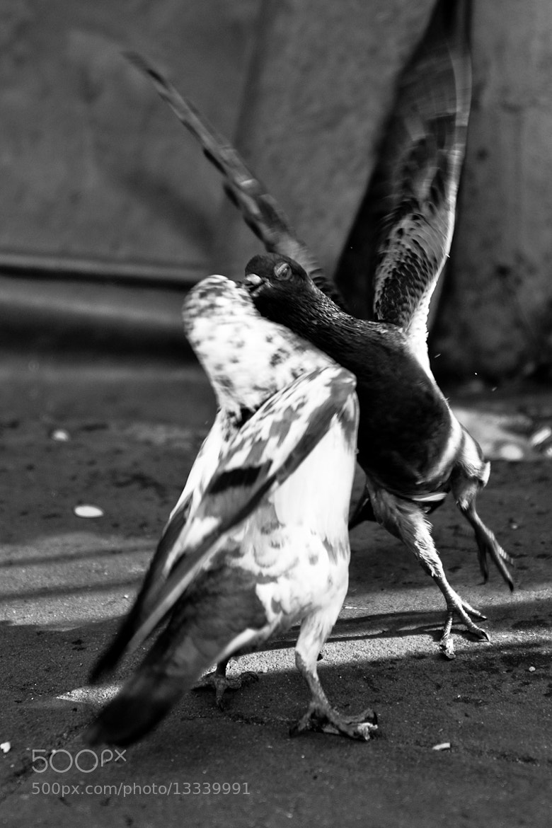Photograph Turf Wars by Phlac Veer on 500px
