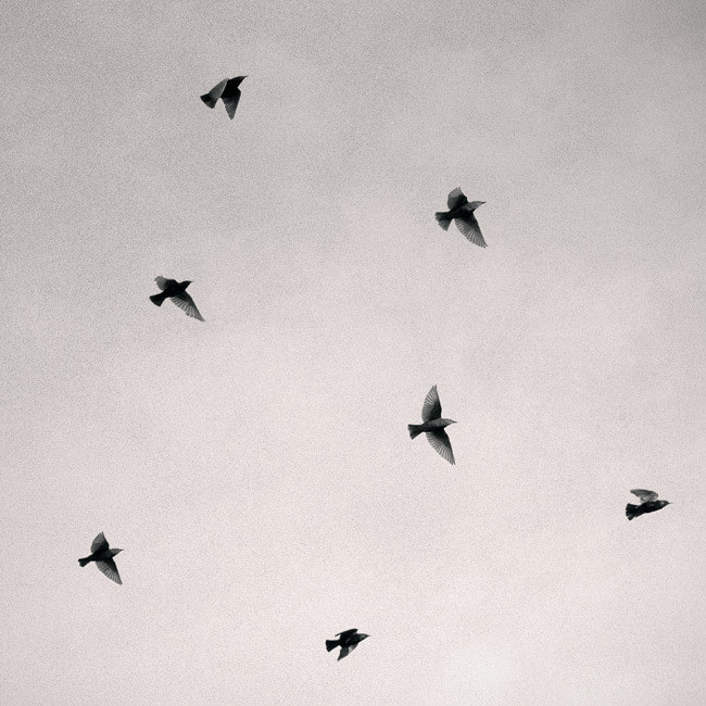 Photograph Seven Birds by Mikael Kapanaga on 500px