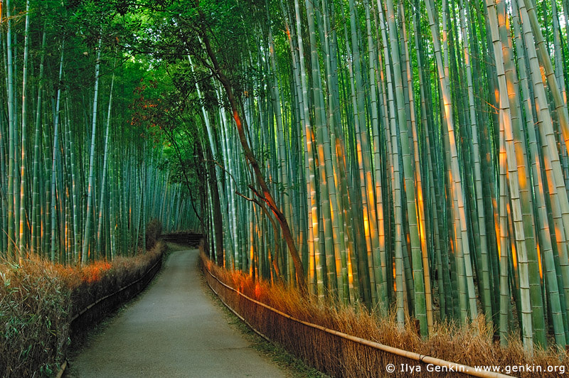 Photograph First Light at Sagano Bamboo Grove, Arashiyama, Kyoto, Japan by Ilya Genkin on 500px