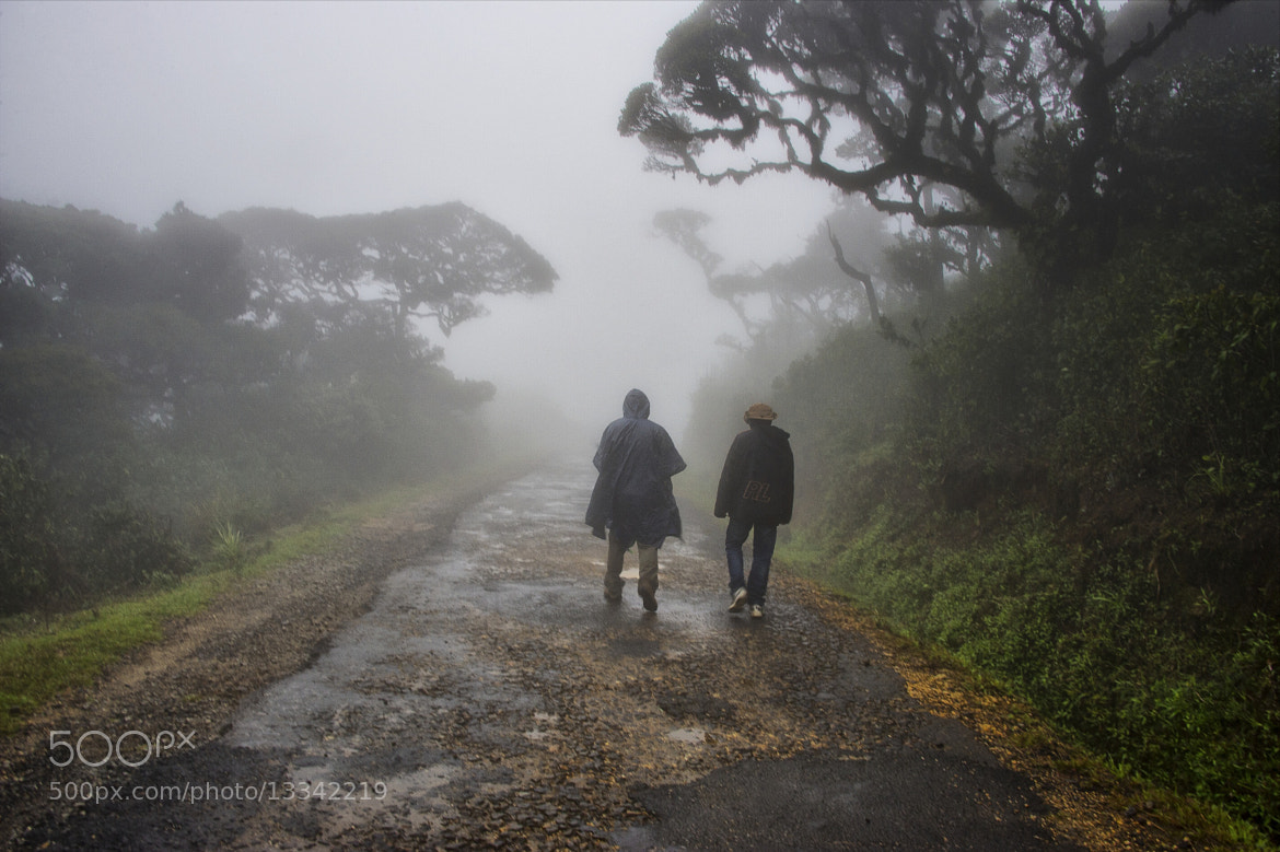 Photograph misty walk by hamni juni on 500px