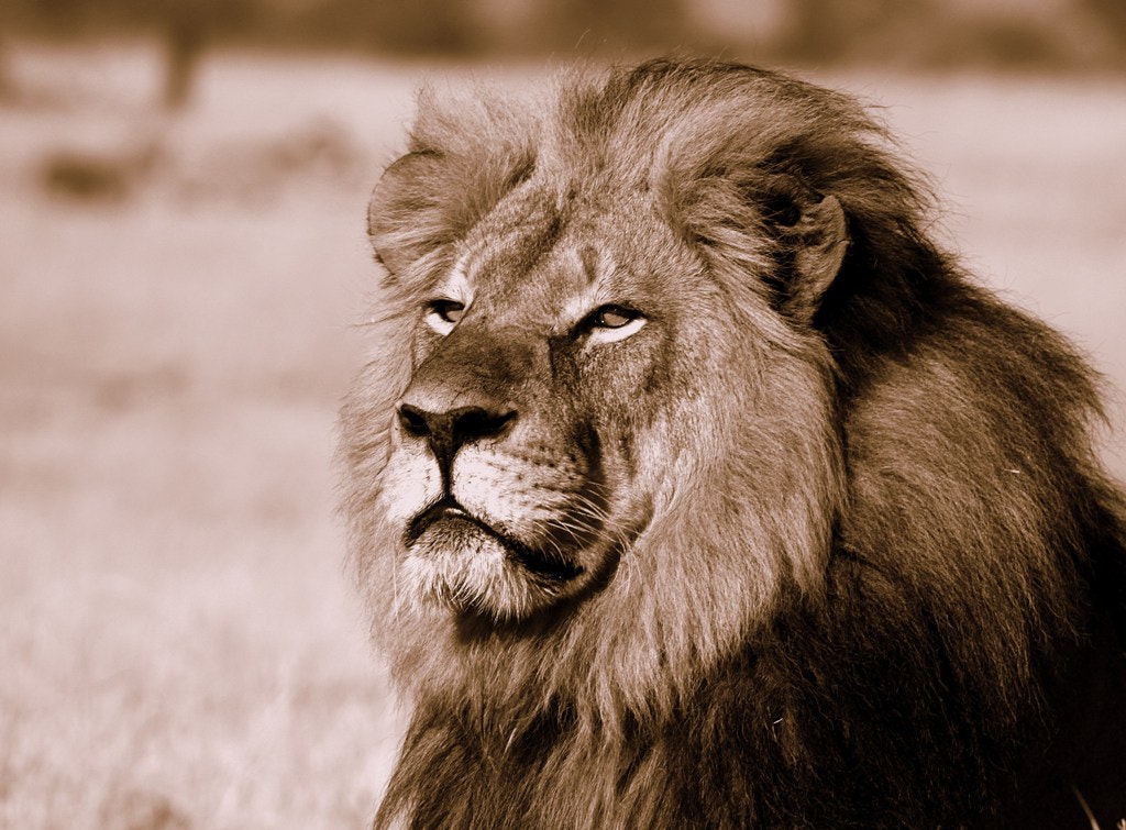 Photograph King of all Beasts by Tamlyn Smith on 500px