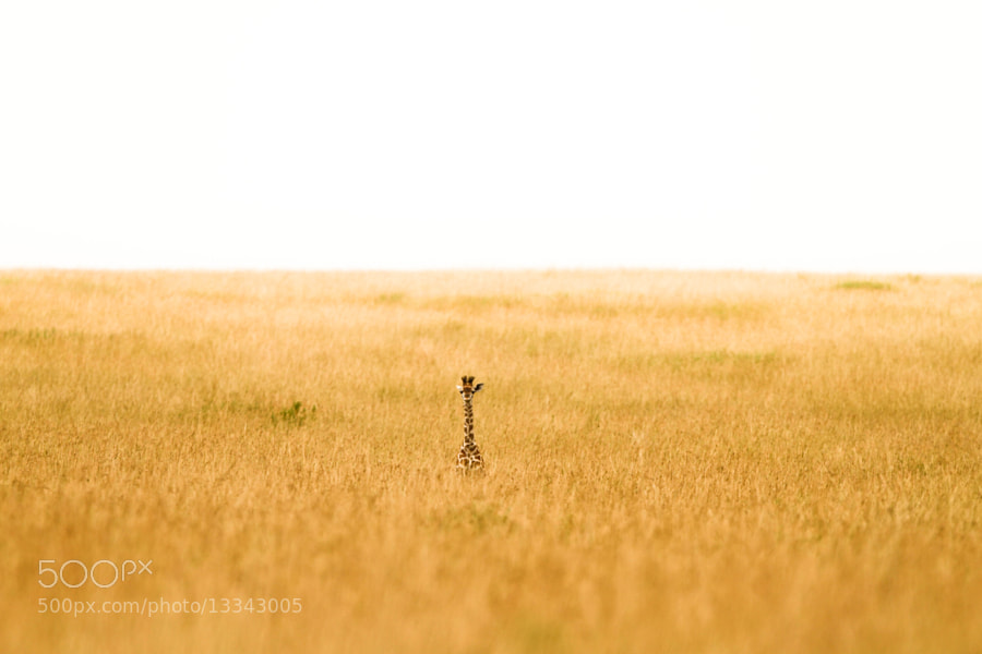 Photograph Alone. by Denzil Mackrory on 500px