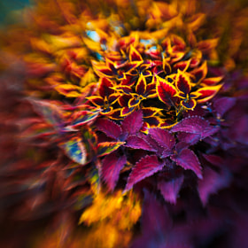 The colors of autumn by Magda Wasiczek (MagdaWasiczek1)) on 500px.com