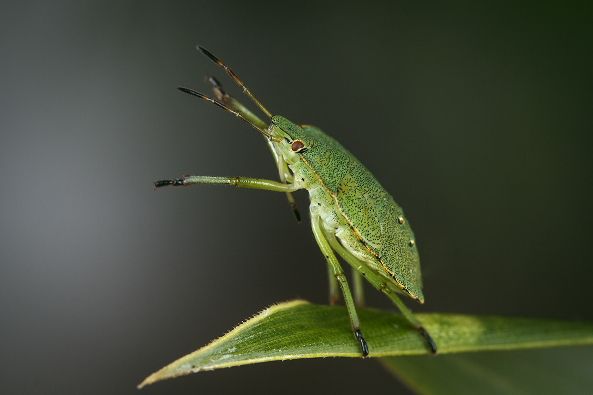 Photograph Lonely bug by Oliver König on 500px