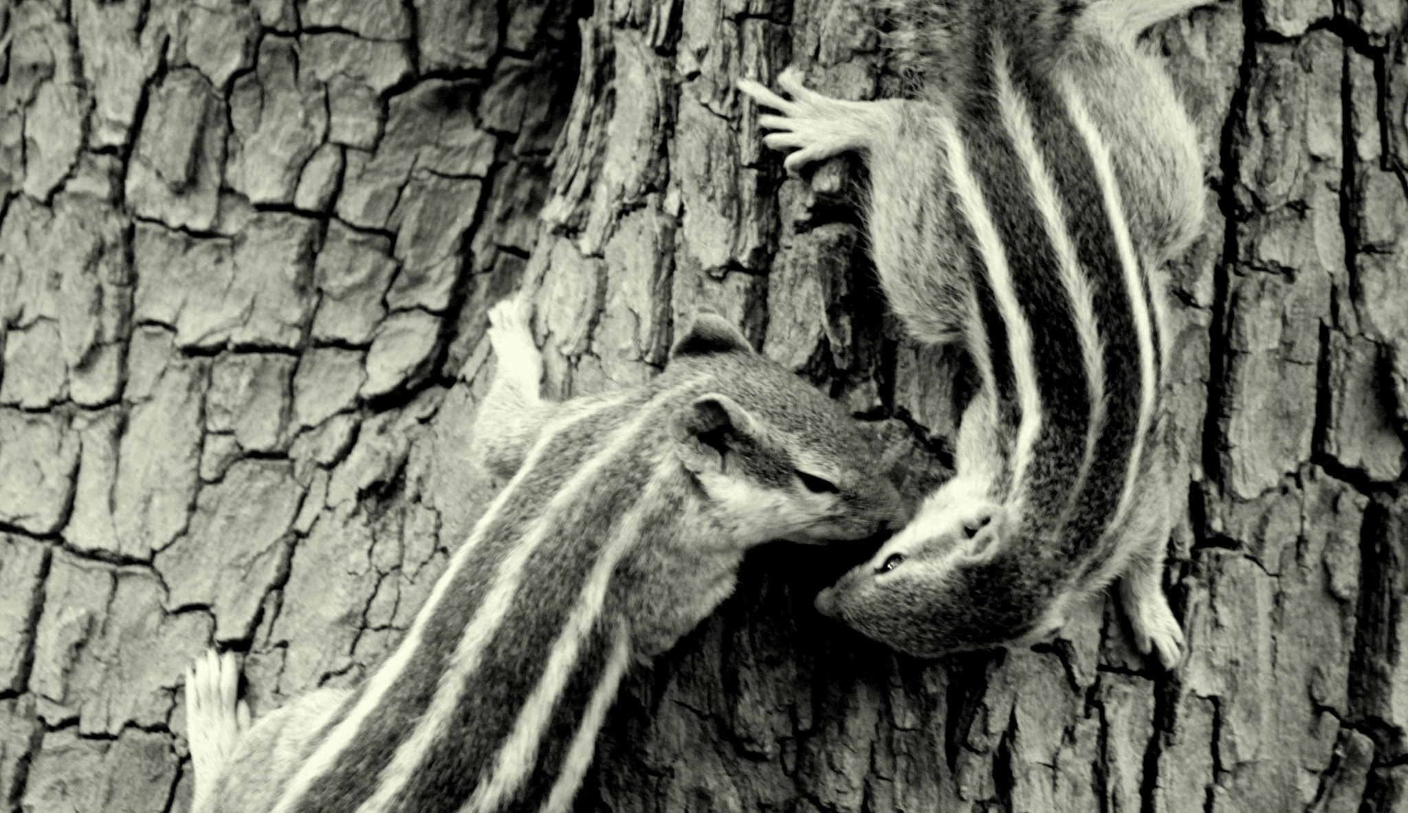 Photograph The squirrel kiss.. by Samrat  Mukhopadhyay on 500px