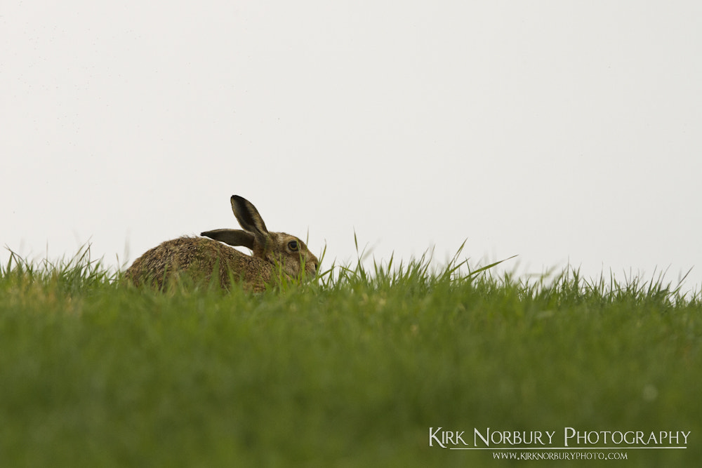 Photograph You Can't See Me by Kirk Norbury on 500px