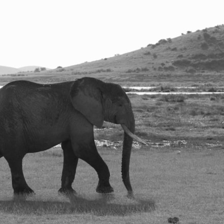 Elephant walking passed a, Canon EOS 650D, Canon EF 28-300mm f/3.5-5.6L IS