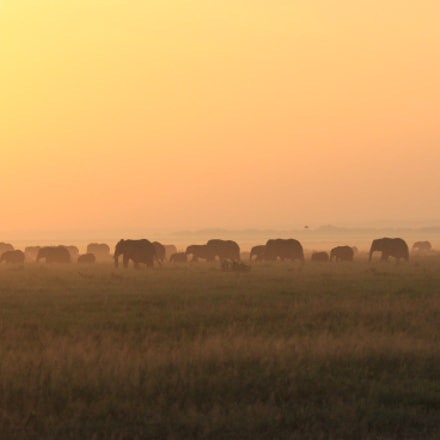 Walking elephant herd at, Canon EOS 650D, Canon EF 28-300mm f/3.5-5.6L IS