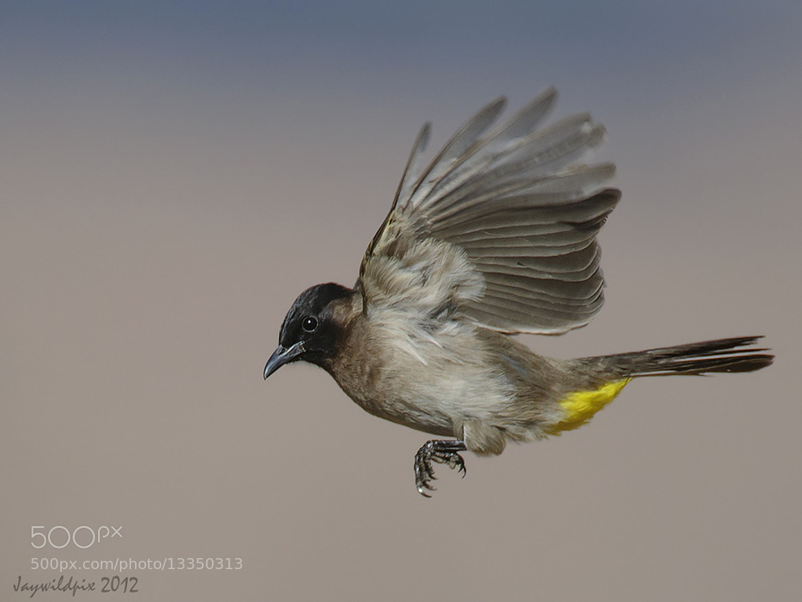 Photograph Fly past by Jay van Rensburg on 500px