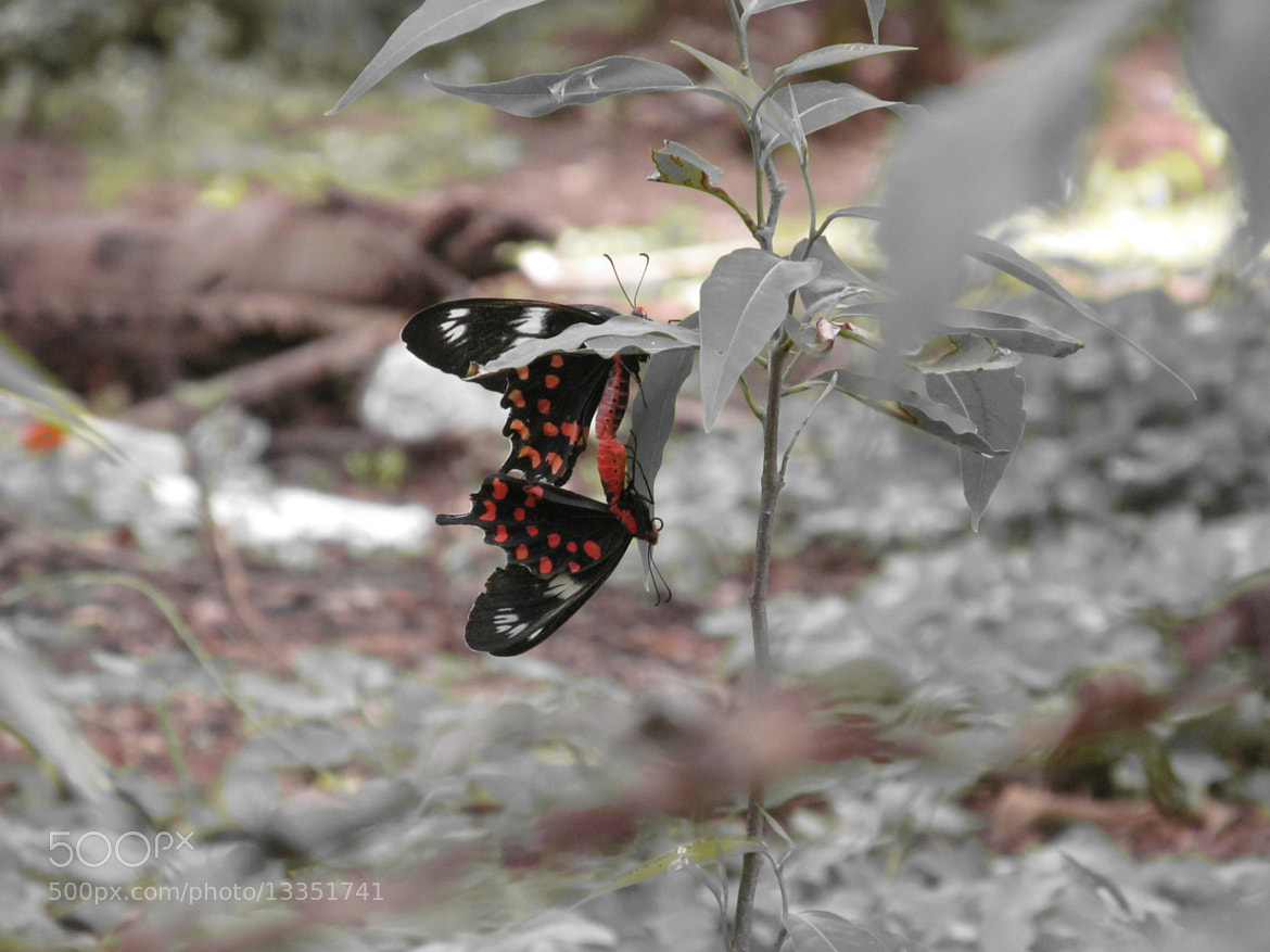 Photograph Butterflies by Kabilan Palani on 500px
