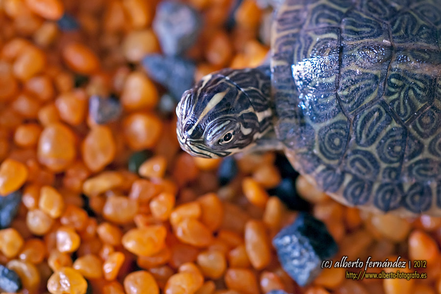 Photograph Turtle by Luis Alberto Fernández Arnanz on 500px