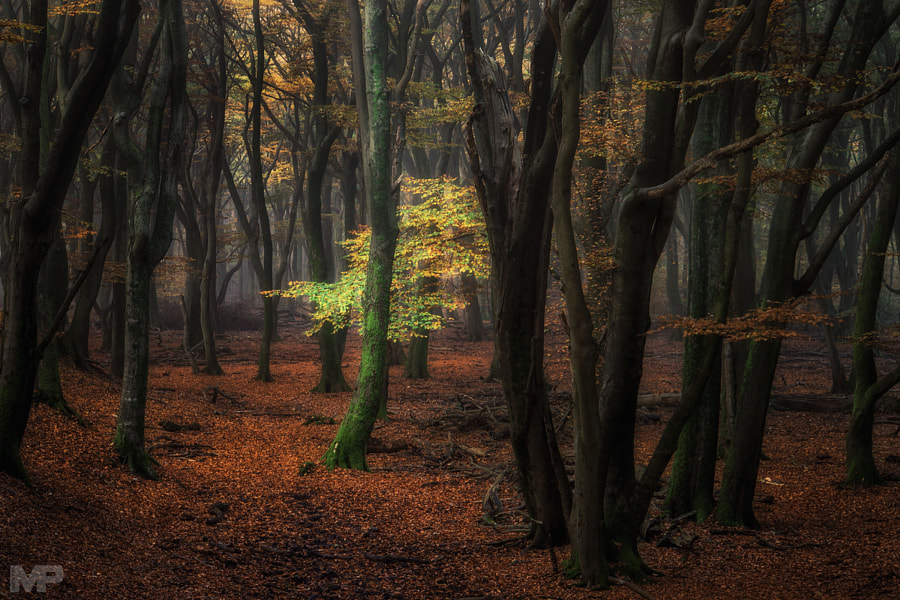 A Light in the Dark by Martin Podt on 500px.com