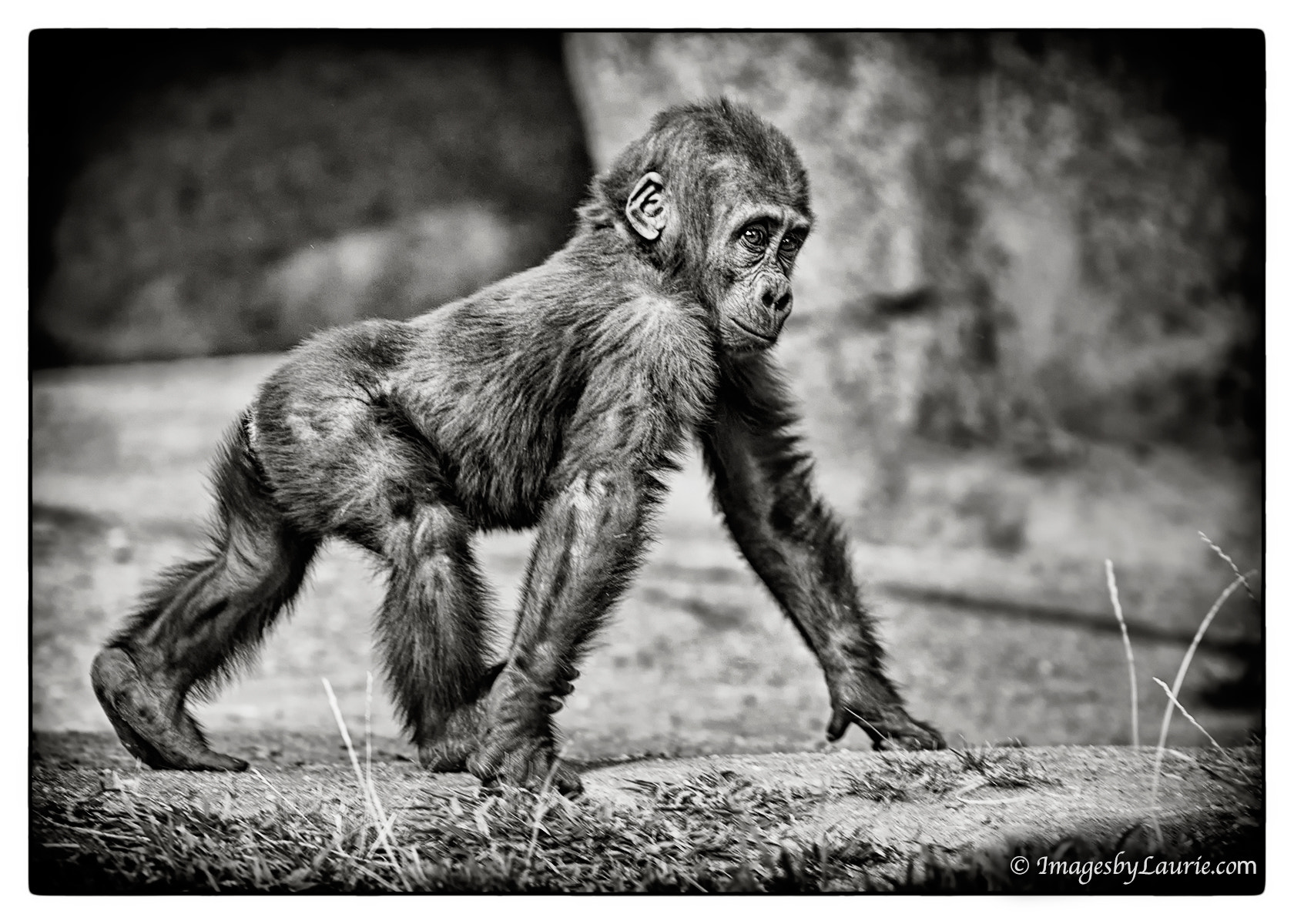 Photograph Strut Your Stuff by Laurie Rubin on 500px