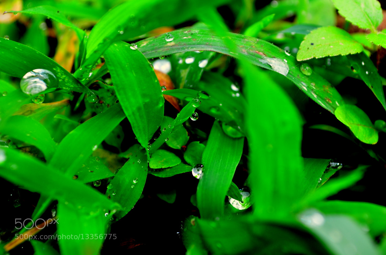 Photograph Morning Dew by Aaditya Kothari on 500px