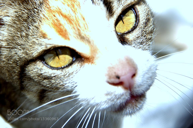 Photograph Whiskey eyes. by alex litvin on 500px