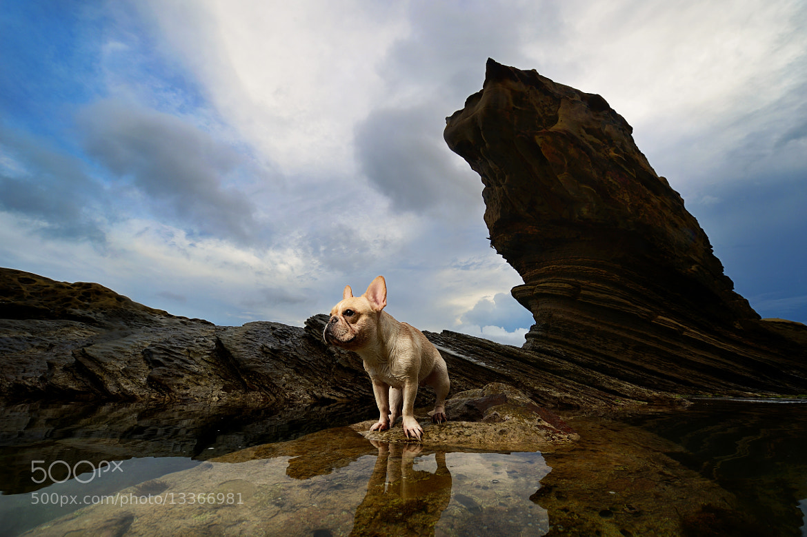 Photograph SeaDog Stone and Dog by Lu Donfer on 500px