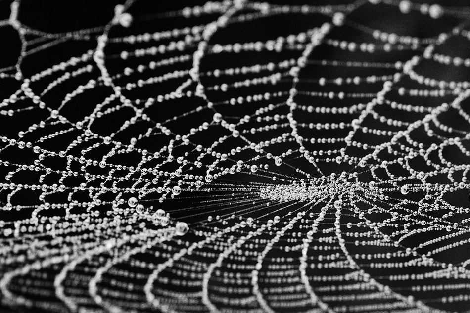 Photograph Web by Inés Montenegro on 500px