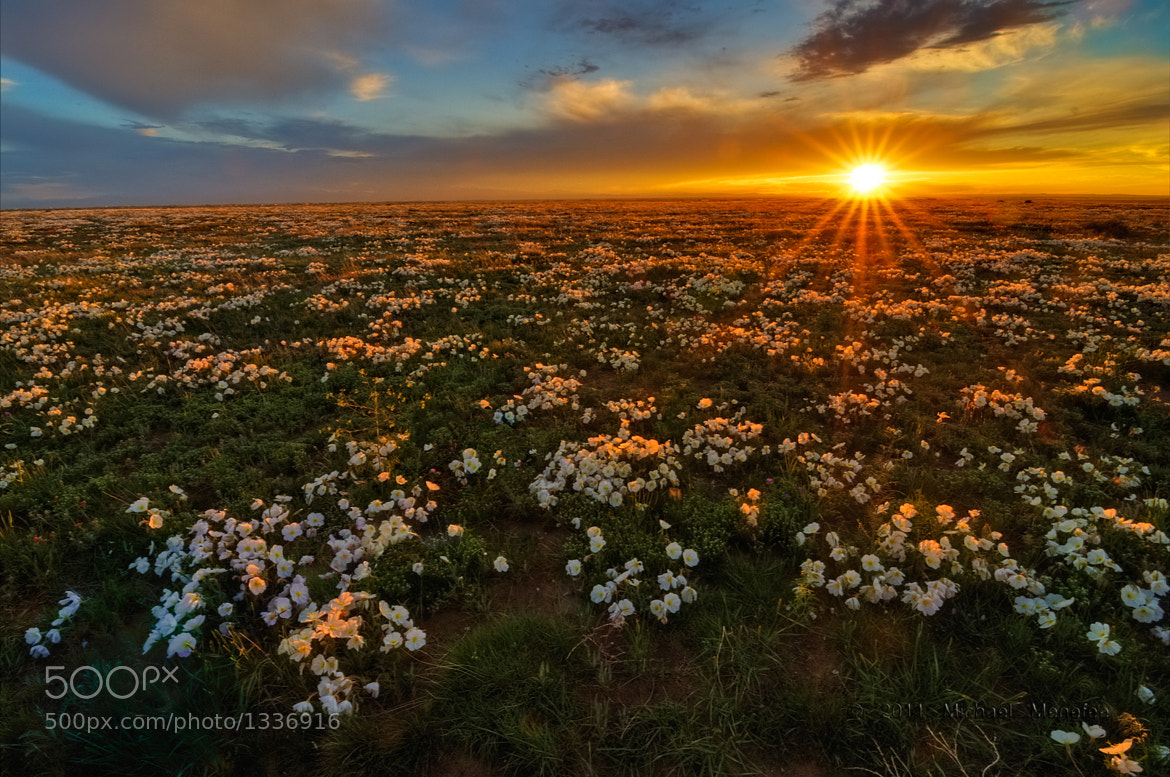 Photograph Pawnee Prairie Primrose Paradisio by Michael Menefee on 500px