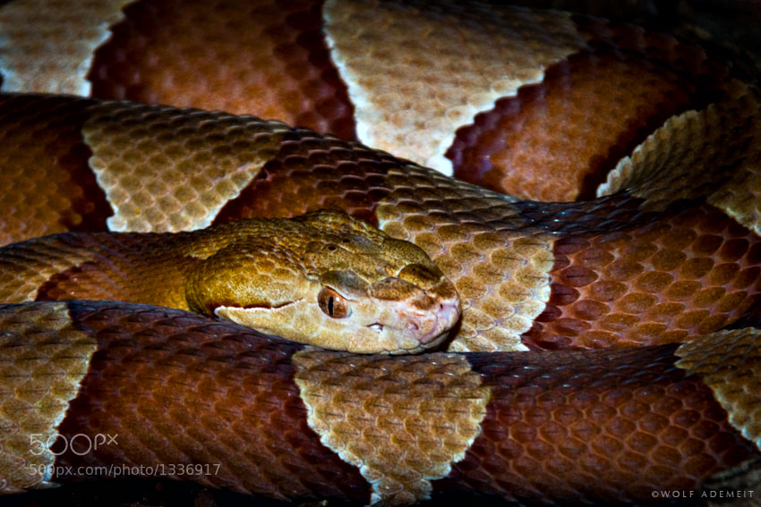 Photograph SNAKE by Wolf Ademeit on 500px