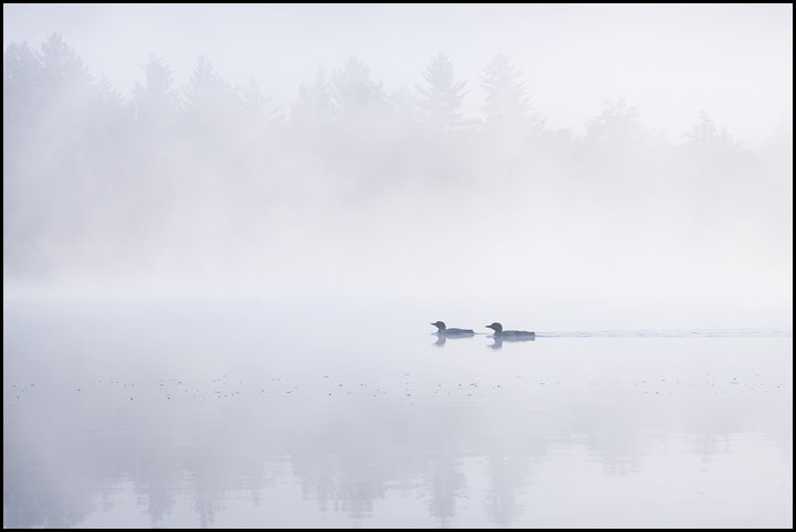 Photograph In the Mist II by Chris Kayler on 500px
