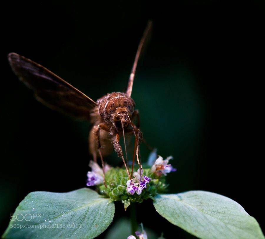 Photograph A Moth's Breakfast by Tony Pratt on 500px