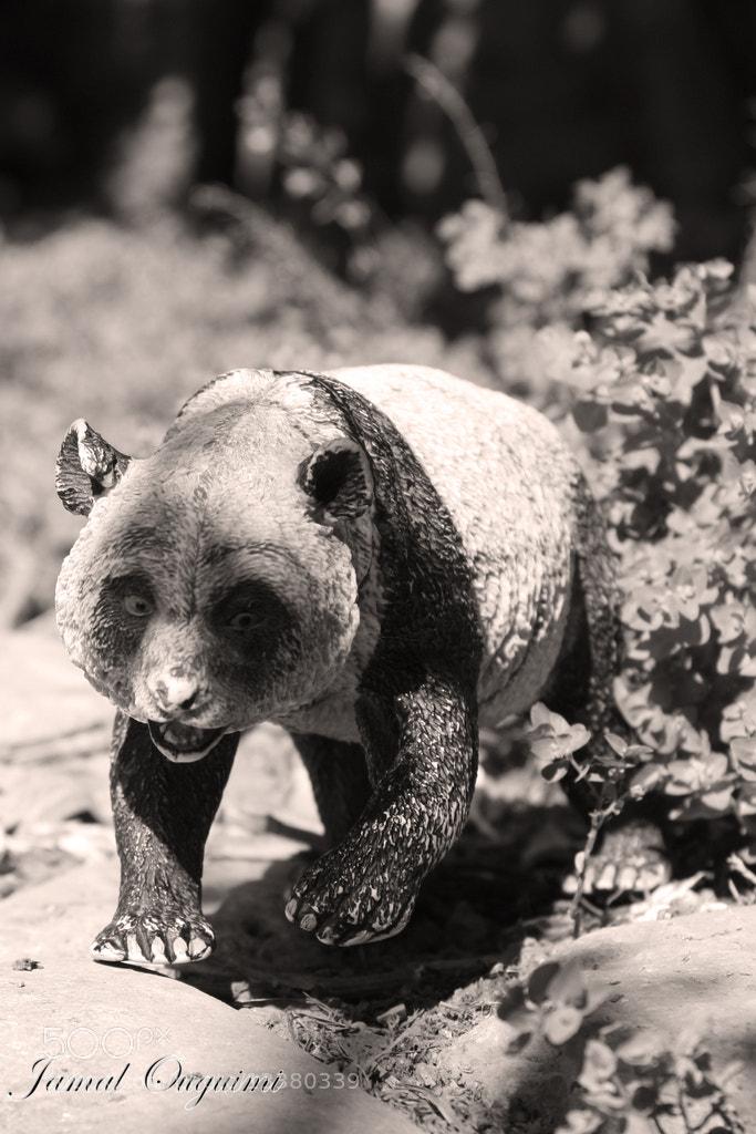 Photograph Panda by Jamal Ouguimi on 500px