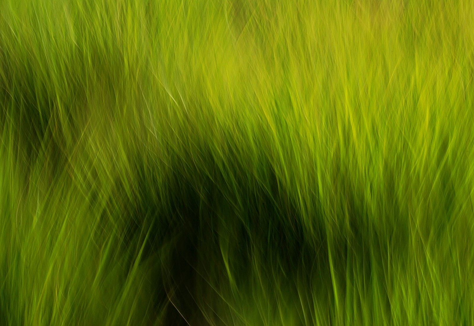 Photograph Green Grass by Lorenzo Cassina on 500px