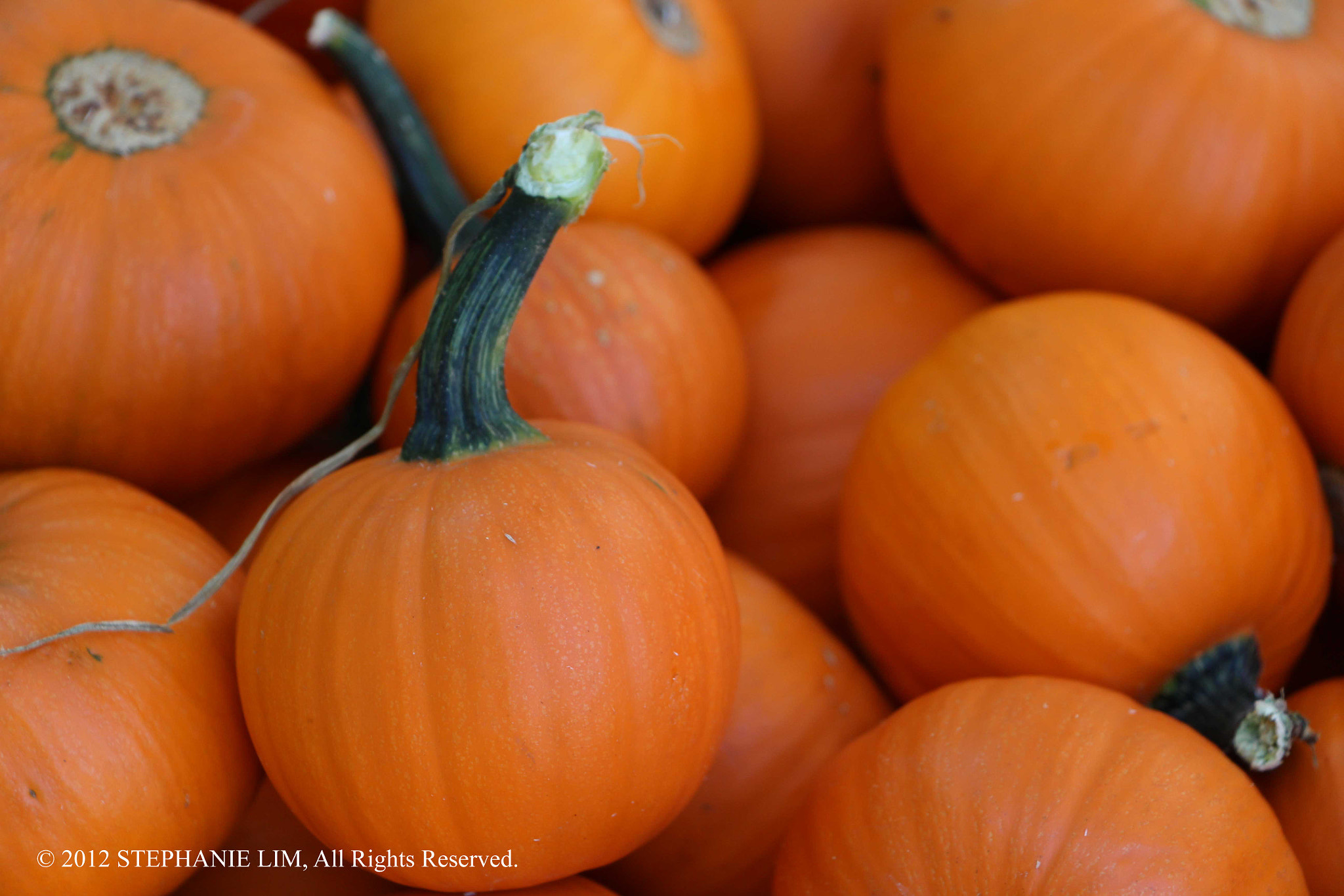 Photograph Mini Pumpkins by Stephanie Lim on 500px