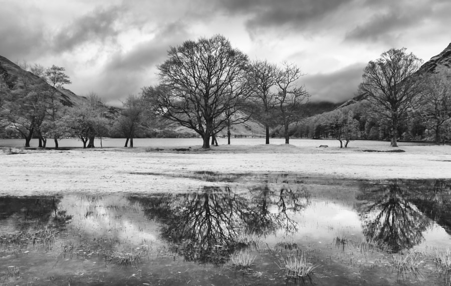 Tree reflections at Buttermere