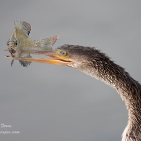Got you !!!!! by Alfred Forns (AForns)) on 500px.com