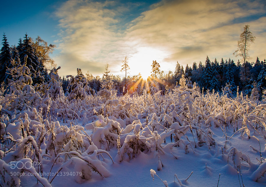 Photograph Winter forest by Alex Bykov on 500px