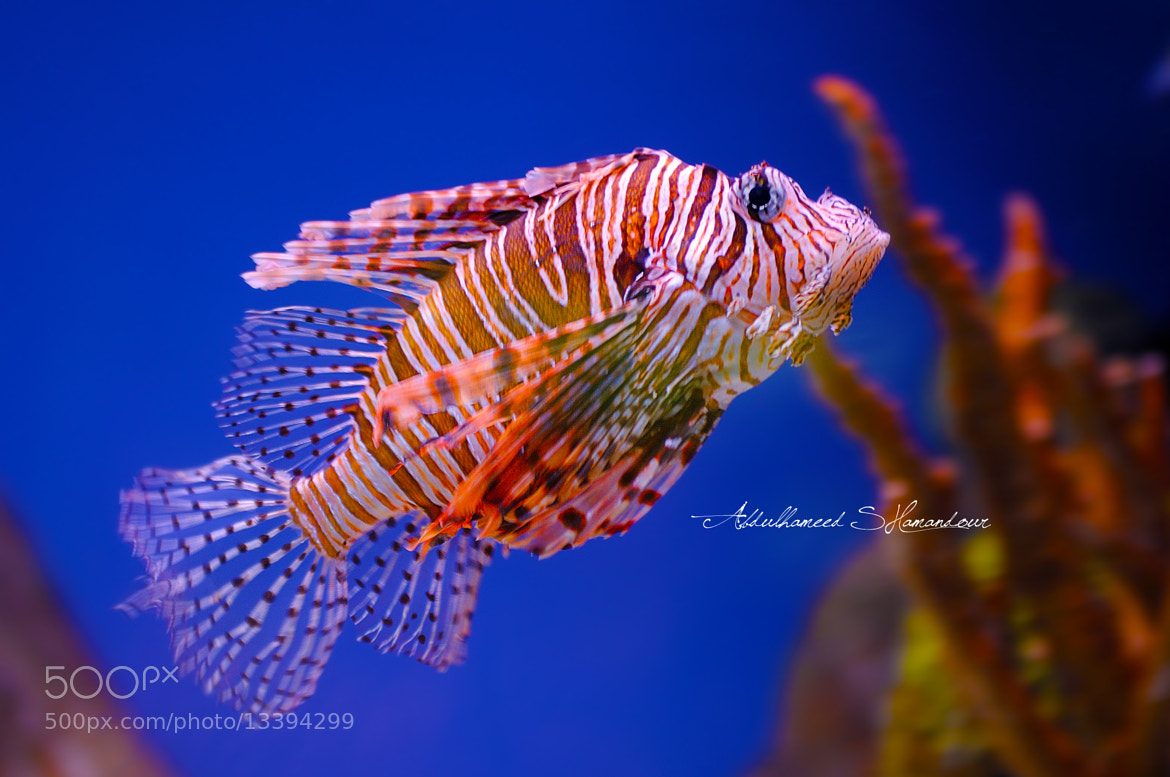 Photograph Colorful Fish by A. Shamandour on 500px