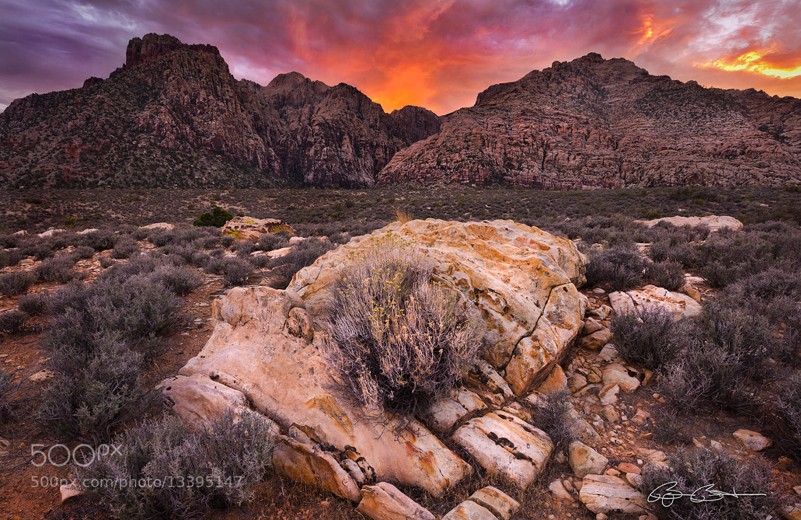 Photograph Flames in the Desert by Björn Burton on 500px