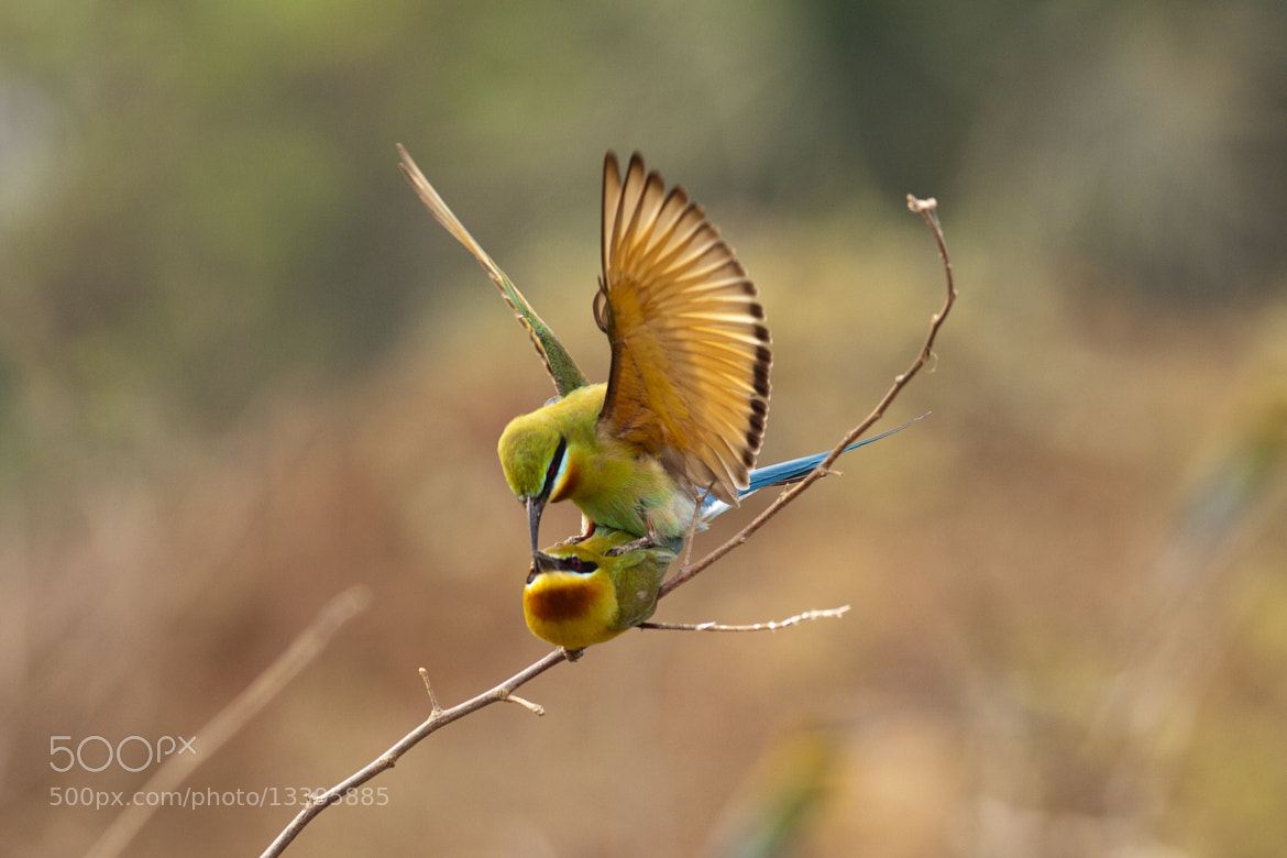 Photograph Is This Love by Jungle Man on 500px