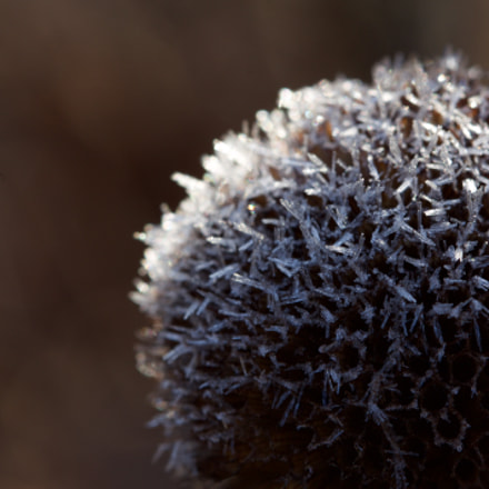 Frosty Morning, Canon EOS REBEL T3, EF100mm f/2.8 Macro USM