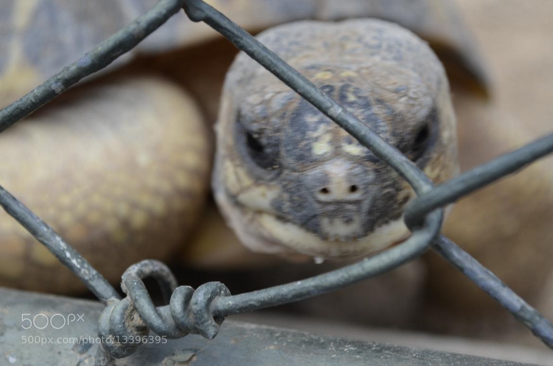 Photograph The prison by Vincent Nuteau on 500px