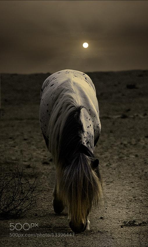 Photograph Soledad / solitude by Francisco García Ramírez on 500px