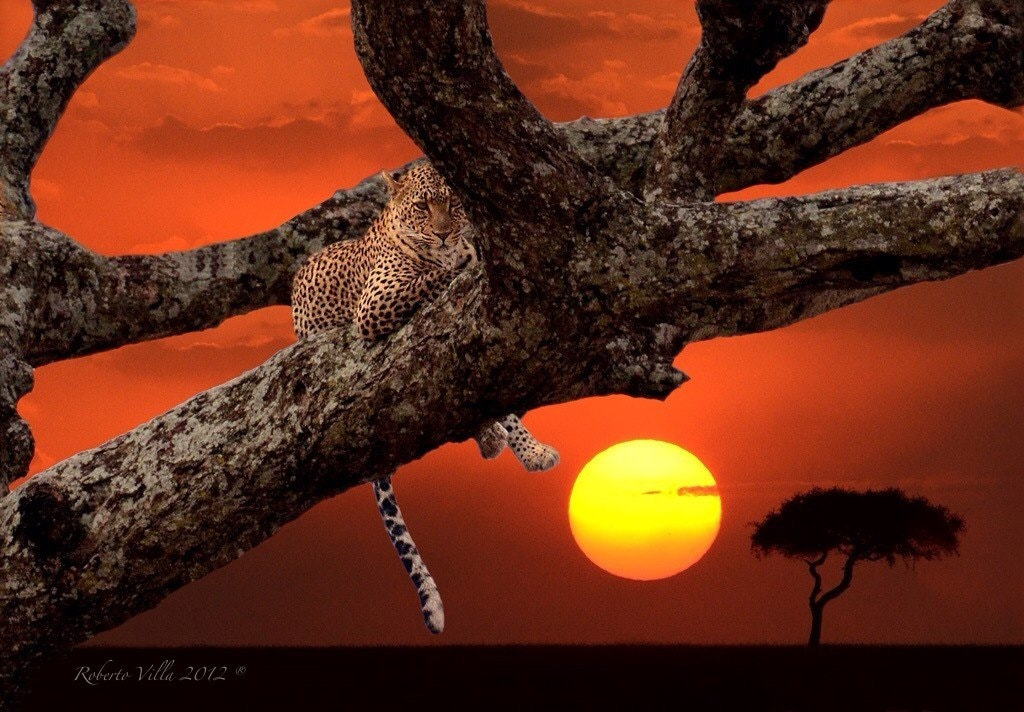 Photograph Leopard at sunset - Serengeti NP - Tanzania by Roby Villa on 500px