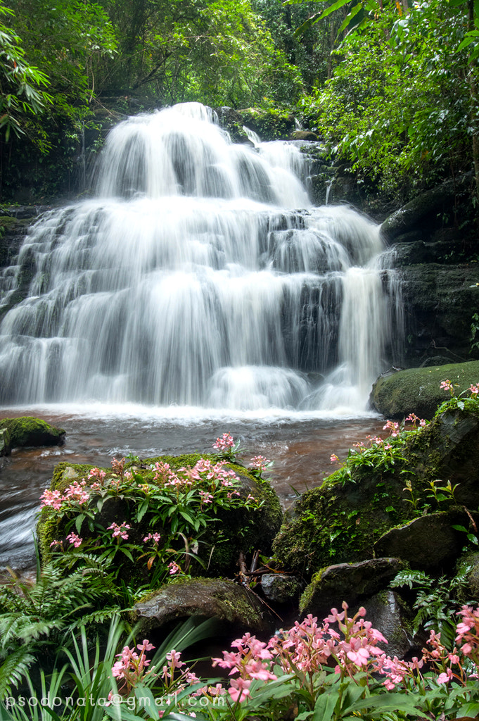 Photograph Mandang waterfall and orchid(Habenaria rhodocheila Hance) foreground. by Arty Sajjawanit on 500px