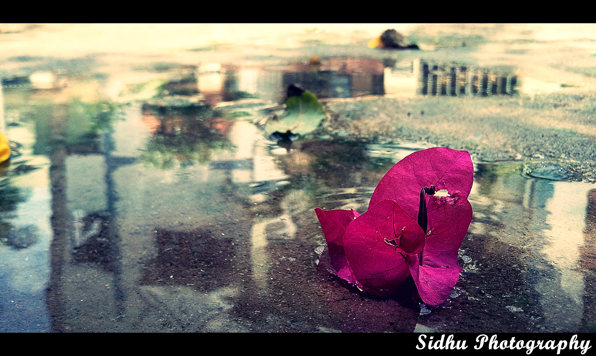 Photograph Fallen Flower by Arun Siddharth on 500px