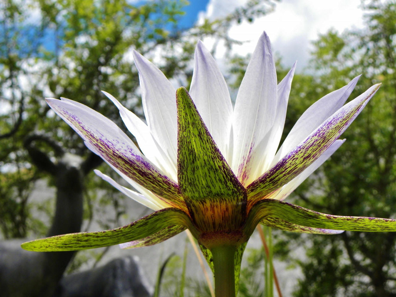 Photograph Water Lily by Rene' Rossouw on 500px