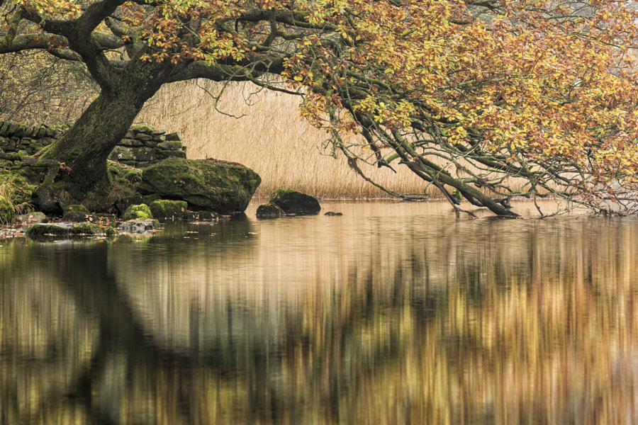 Autumn Tree at Rydal Water